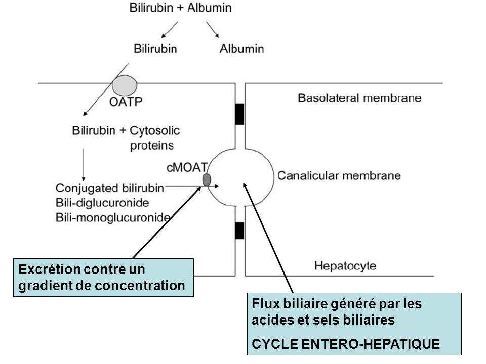 Excrétion contre un gradient de concentration Flux biliaire généré par les acides et sels biliaires CYCLE ENTERO-HEPATIQUE