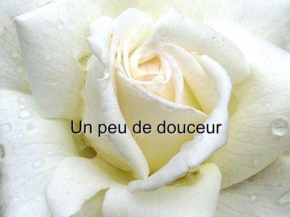 les mots qu'on ne dit pas sont les fleurs du silence (proverbe Japonais)