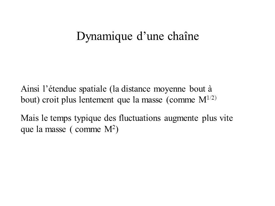 Dynamique d'une chaîne Ainsi l'étendue spatiale (la distance moyenne bout à bout) croit plus lentement que la masse (comme M 1/2) Mais le temps typique des fluctuations augmente plus vite que la masse ( comme M 2 )