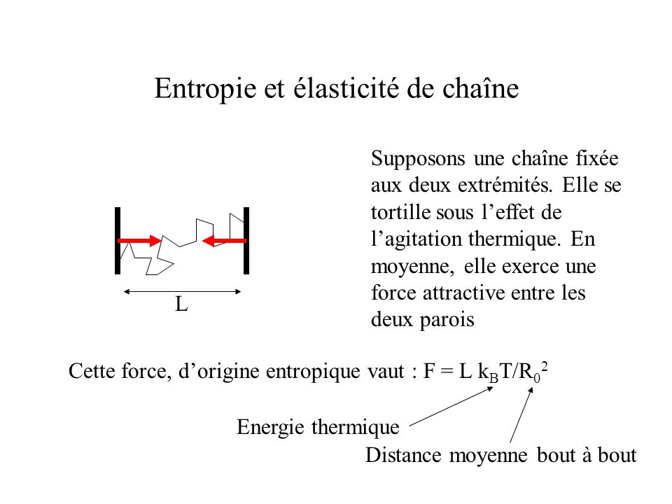 Entropie et élasticité de chaîne Supposons une chaîne fixée aux deux extrémités.