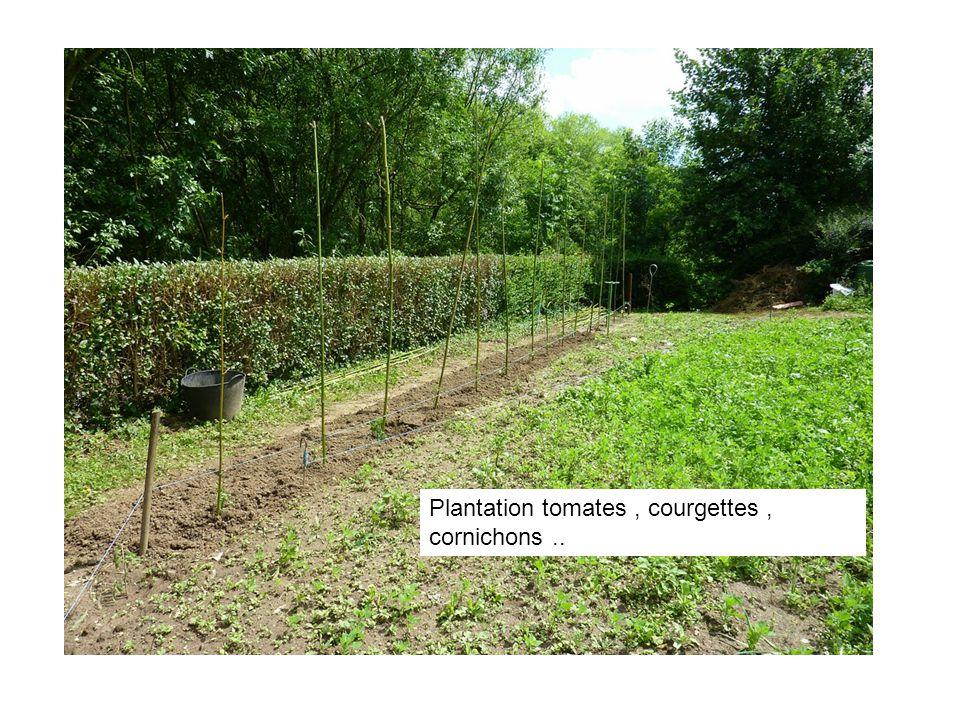 Plantation tomates, courgettes, cornichons..