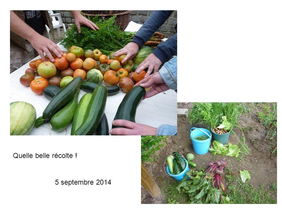 Quelle belle récolte ! 5 septembre 2014
