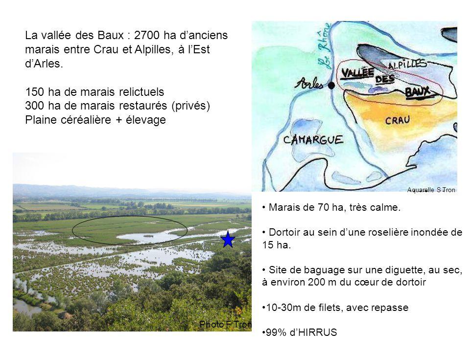 Effectifs max : 441 000 le 12/9/2004 505 000 le 15/9/2006 (216 000 le 30/8/2007) Estimations réalisés à l'aube lorsque les Hirondelles s'élèvent rapidement à une hauteur de 100-200m avant de se disperser.