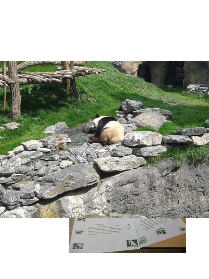 Lecture des mondes de Pairi Daiza et mise en évidence d'animaux Visite de pairi daiza avec défi (prendre en photo les animaux vus en classe)
