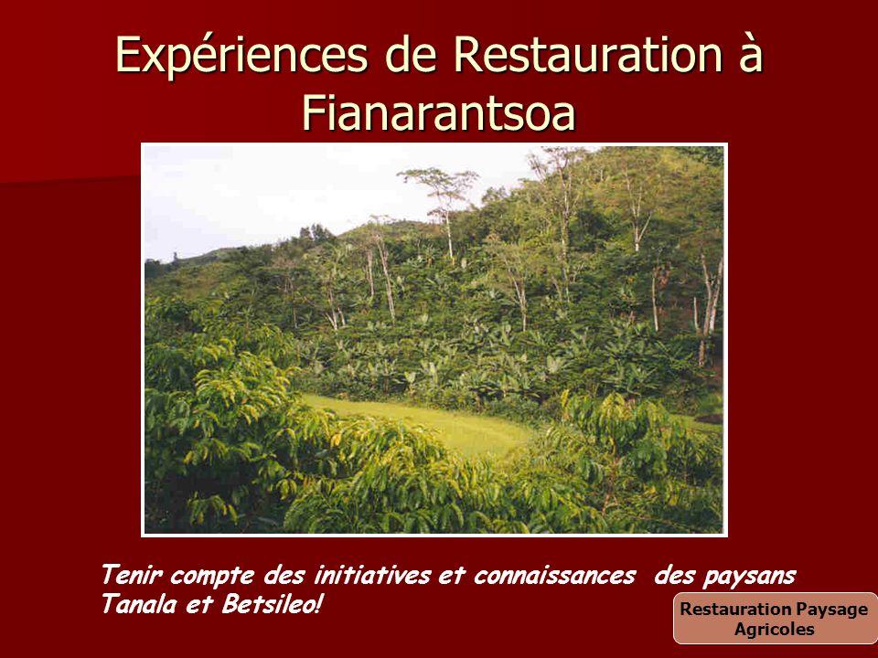 Expériences de Restauration à Fianarantsoa Tenir compte des initiatives et connaissances des paysans Tanala et Betsileo! Restauration Paysage Agricole