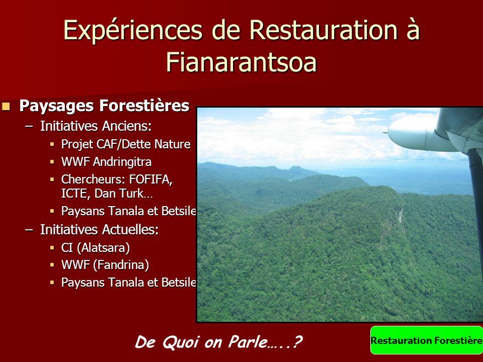 Expériences de Restauration à Fianarantsoa Paysages Forestières Paysages Forestières –Initiatives Anciens:  Projet CAF/Dette Nature  WWF Andringitra