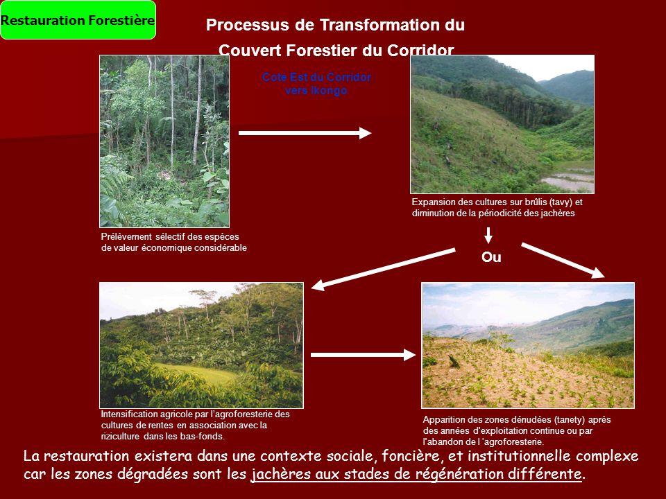 Processus de Transformation du Couvert Forestier du Corridor Prélèvement sélectif des espèces de valeur économique considérable Coté Est du Corridor v