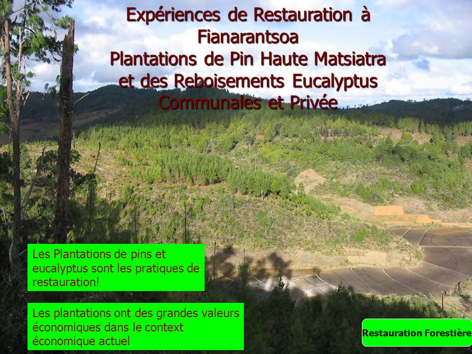 Expériences de Restauration à Fianarantsoa Plantations de Pin Haute Matsiatra et des Reboisements Eucalyptus Communales et Privée Restauration Foresti