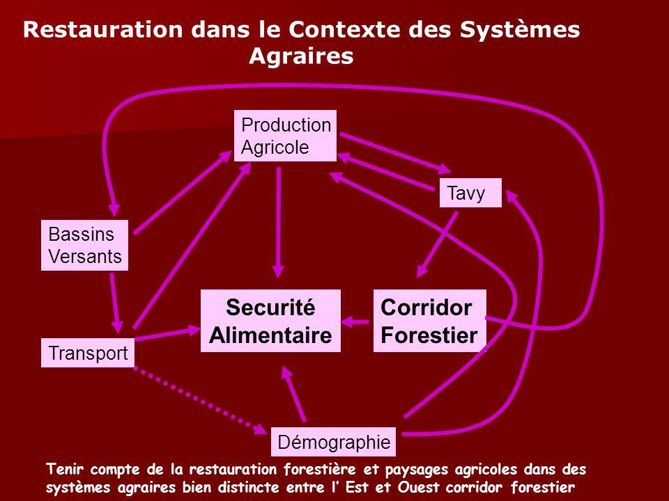 Tavy Corridor Forestier Transport Bassins Versants Production Agricole Démographie Securité Alimentaire Restauration dans le Contexte des Systèmes Agr