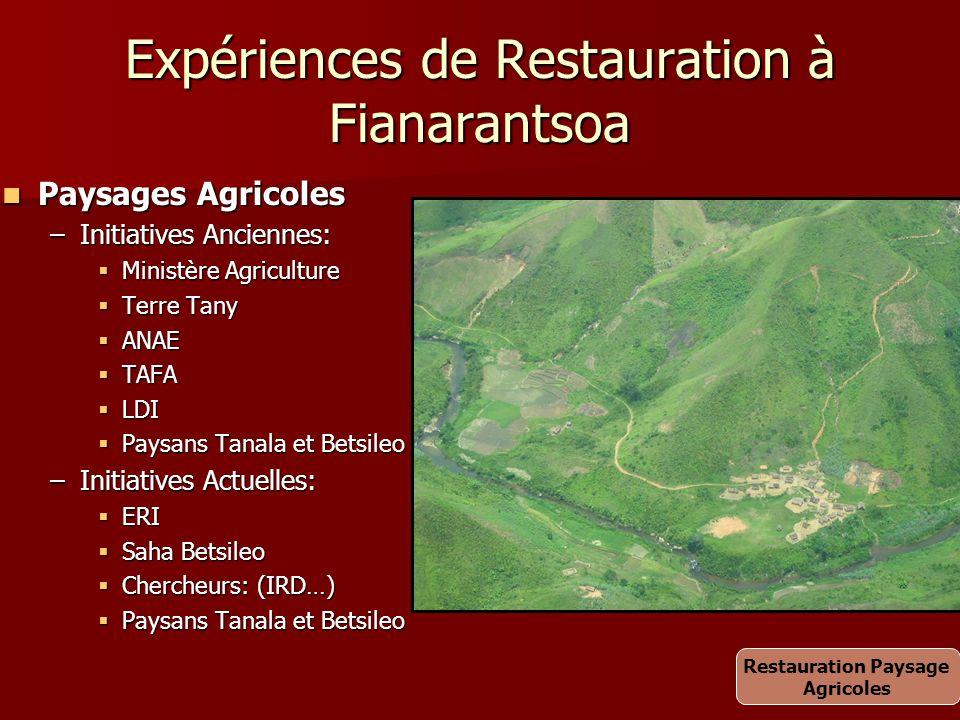 Expériences de Restauration à Fianarantsoa Paysages Agricoles Paysages Agricoles –Initiatives Anciennes:  Ministère Agriculture  Terre Tany  ANAE 