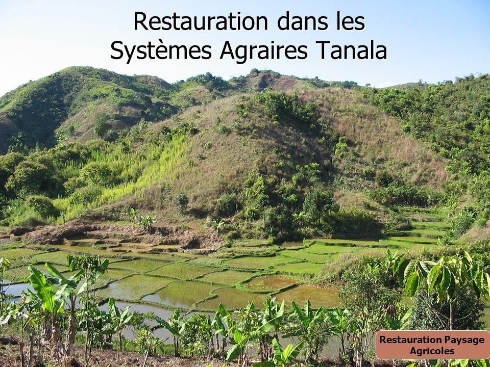 Restauration dans les Systèmes Agraires Tanala Restauration Paysage Agricoles