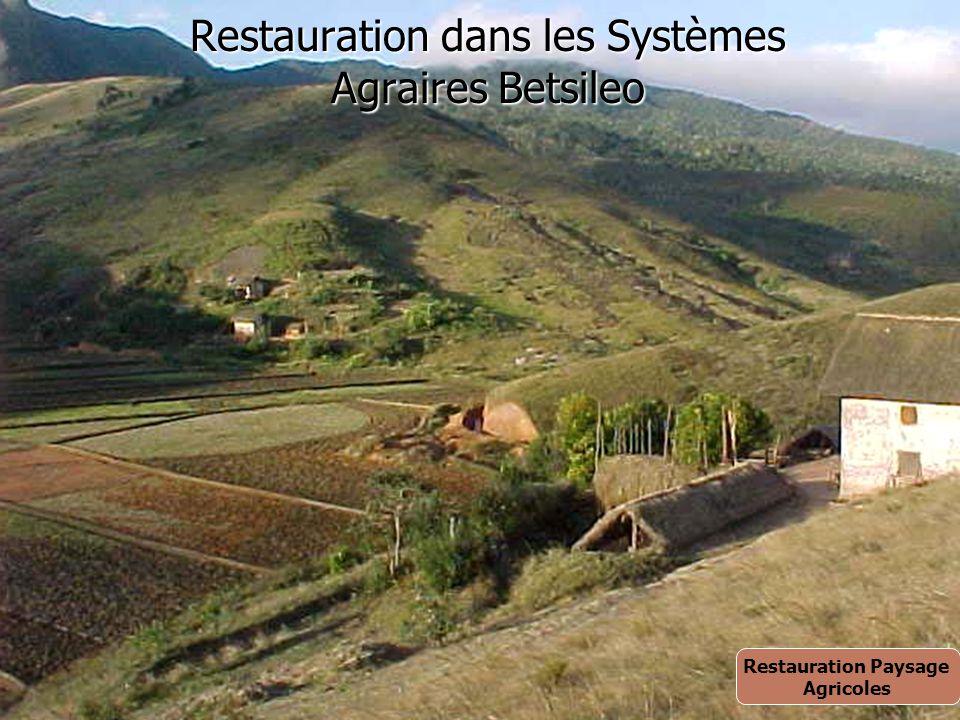 Restauration dans les Systèmes Agraires Betsileo Restauration Paysage Agricoles