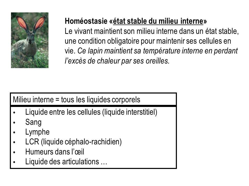 Homéostasie «état stable du milieu interne» Le vivant maintient son milieu interne dans un état stable, une condition obligatoire pour maintenir ses c