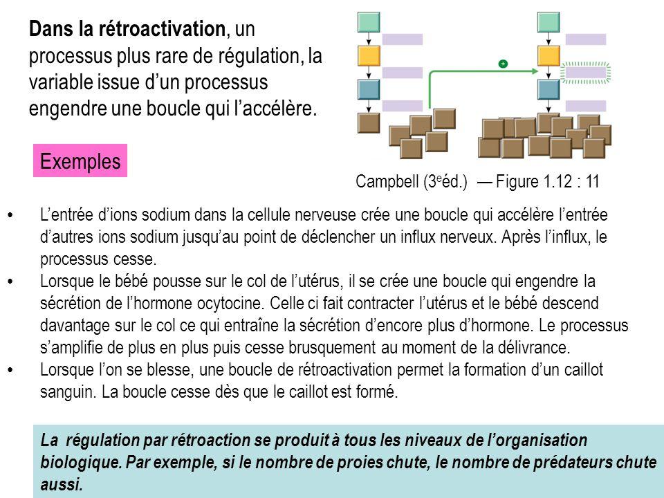 Dans la rétroactivation, un processus plus rare de régulation, la variable issue d'un processus engendre une boucle qui l'accélère. Campbell (3 e éd.)