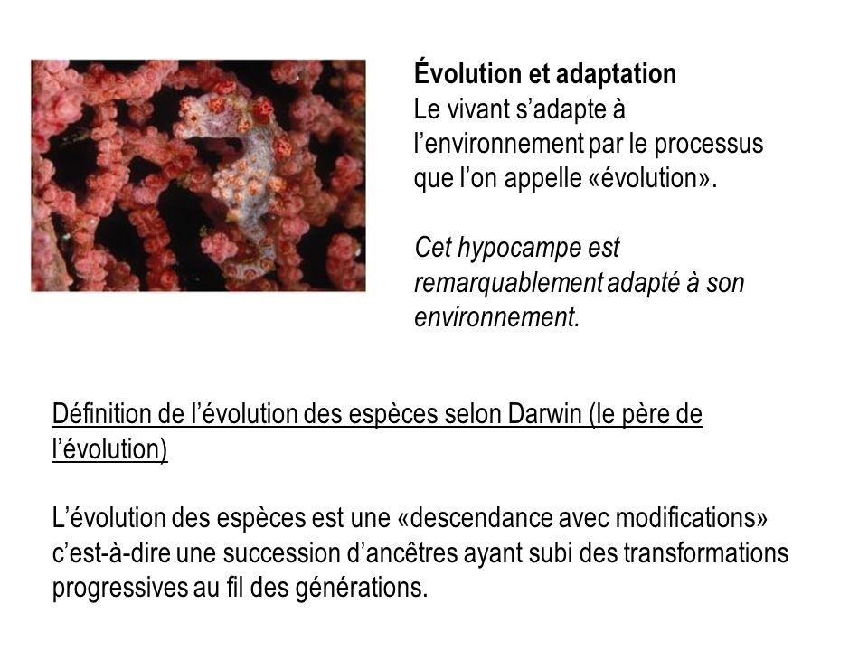Évolution et adaptation Le vivant s'adapte à l'environnement par le processus que l'on appelle «évolution». Cet hypocampe est remarquablement adapté à