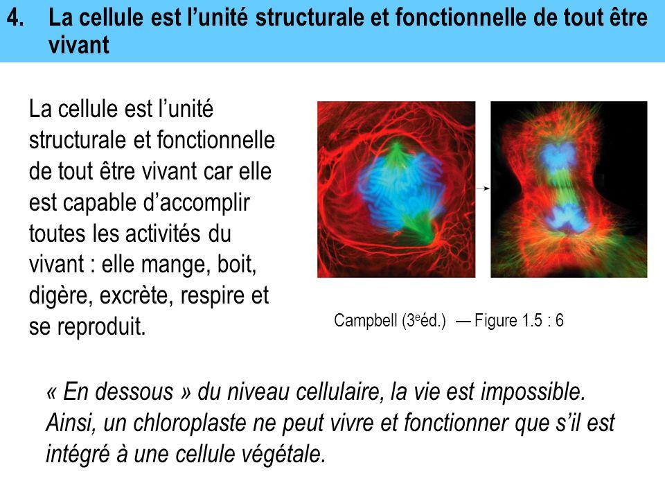 4.La cellule est l'unité structurale et fonctionnelle de tout être vivant La cellule est l'unité structurale et fonctionnelle de tout être vivant car