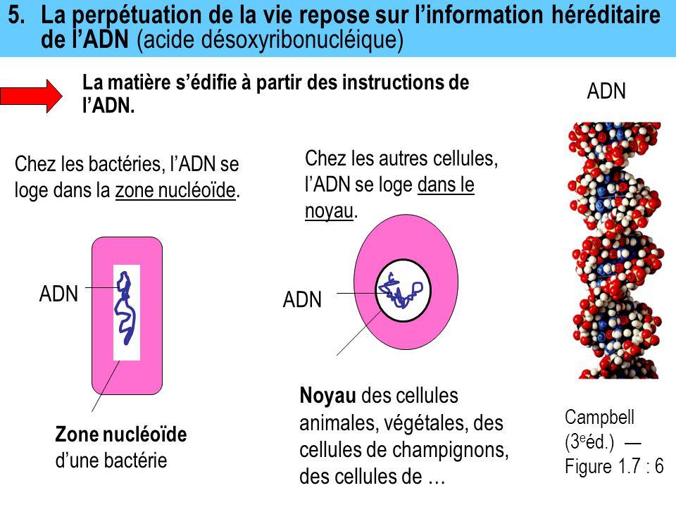 5.La perpétuation de la vie repose sur l'information héréditaire de l'ADN (acide désoxyribonucléique) La matière s'édifie à partir des instructions de