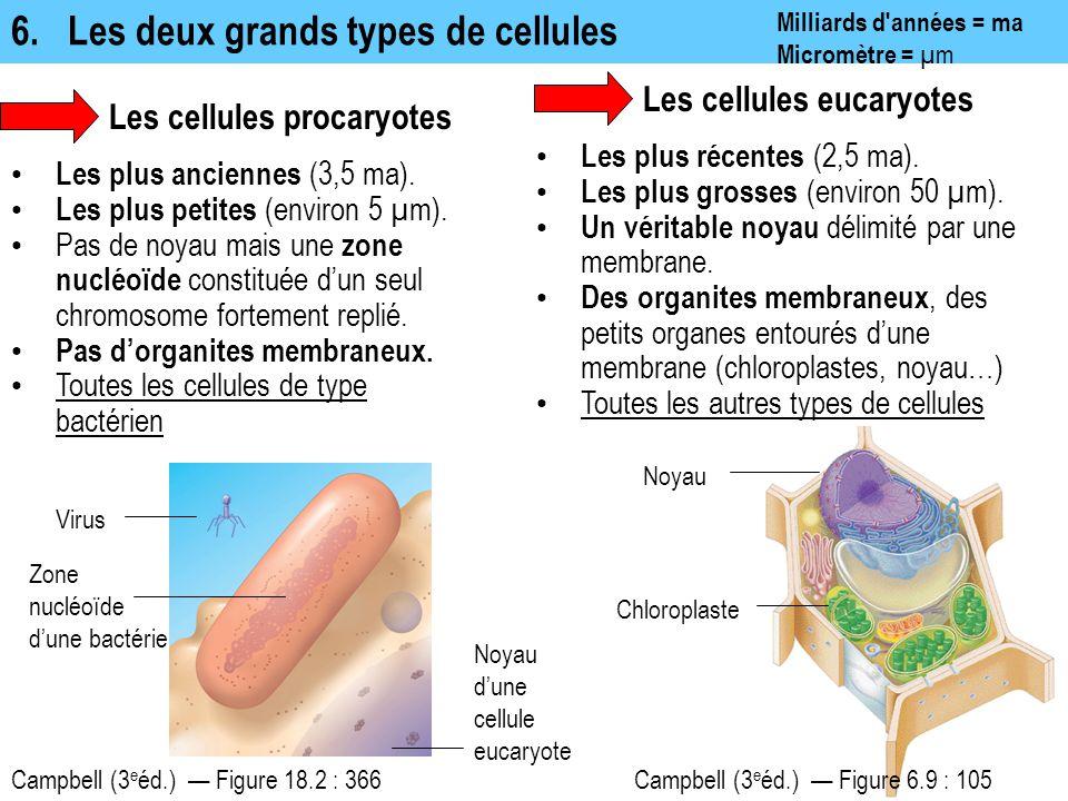 6.Les deux grands types de cellules Milliards d'années = ma Micromètre = µm Les cellules eucaryotes Campbell (3 e éd.) — Figure 6.9 : 105 Noyau Chloro