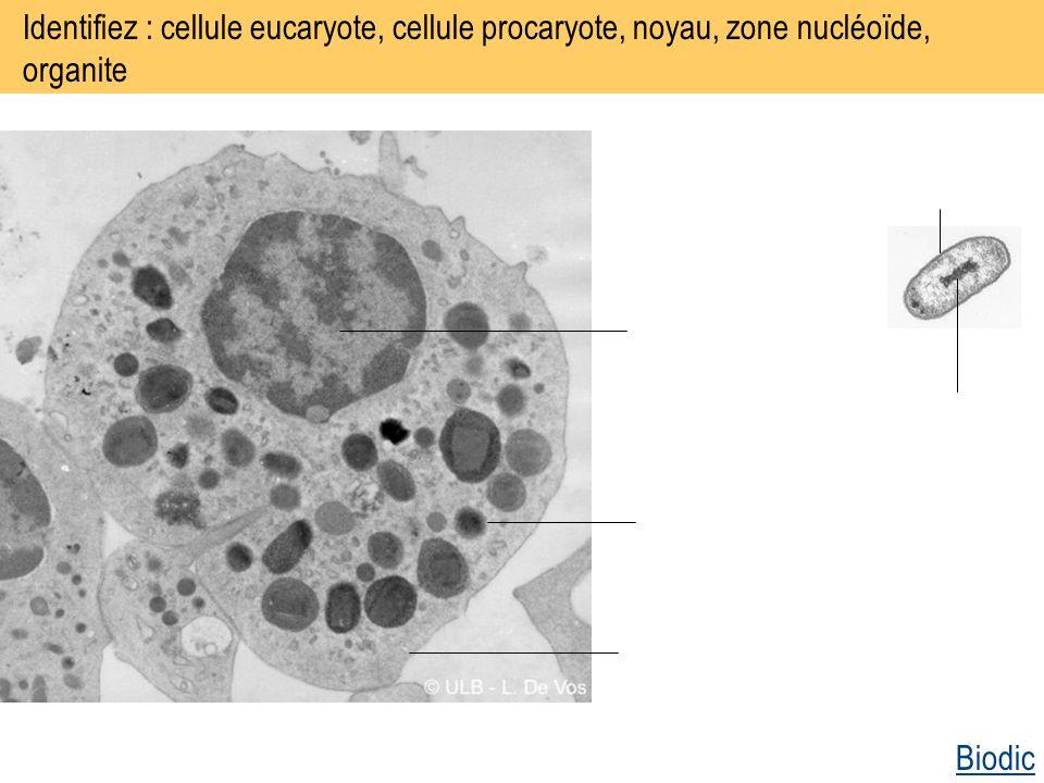 Identifiez : cellule eucaryote, cellule procaryote, noyau, zone nucléoïde, organite Biodic