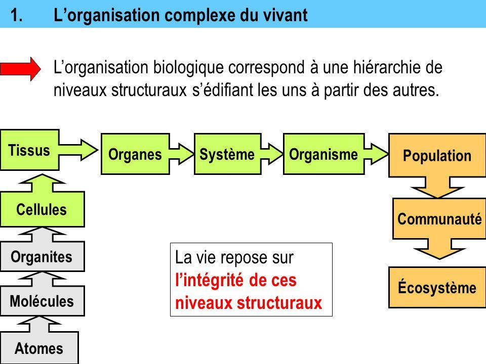14.Composition de la matière La matière est constituée d'éléments chimiques purs ou combinés en composés.