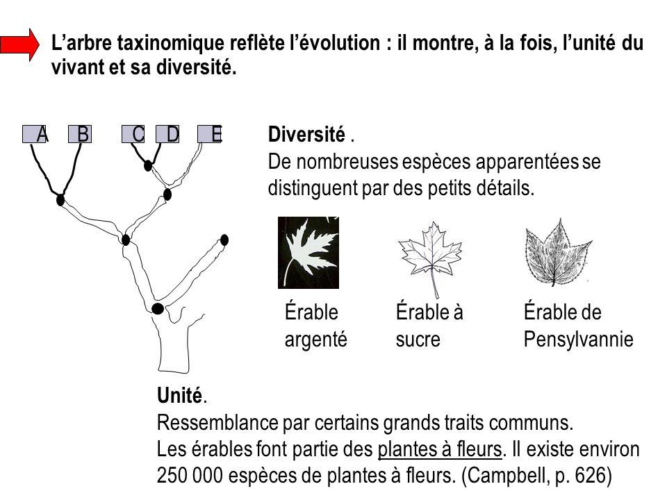 L'arbre taxinomique reflète l'évolution : il montre, à la fois, l'unité du vivant et sa diversité. ABCDE Diversité. De nombreuses espèces apparentées
