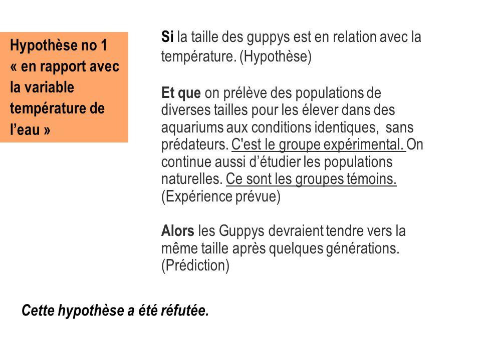 Hypothèse no 1 « en rapport avec la variable température de l'eau » Si la taille des guppys est en relation avec la température. (Hypothèse) Et que on