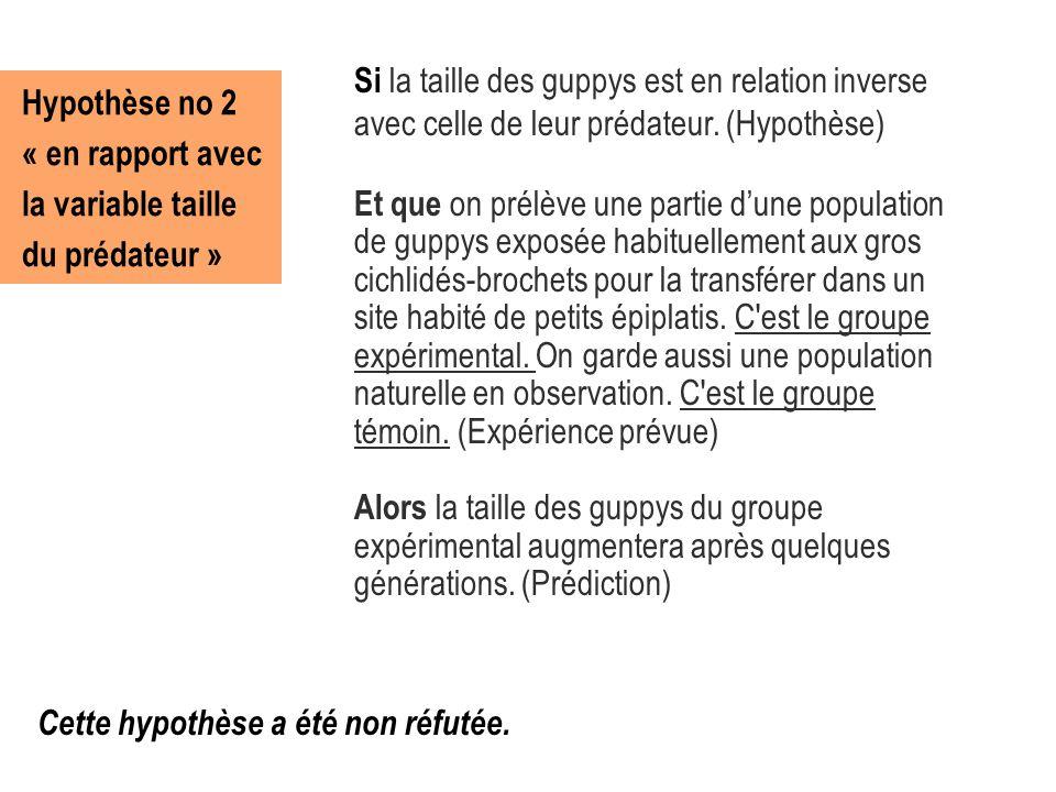 Hypothèse no 2 « en rapport avec la variable taille du prédateur » Si la taille des guppys est en relation inverse avec celle de leur prédateur. (Hypo