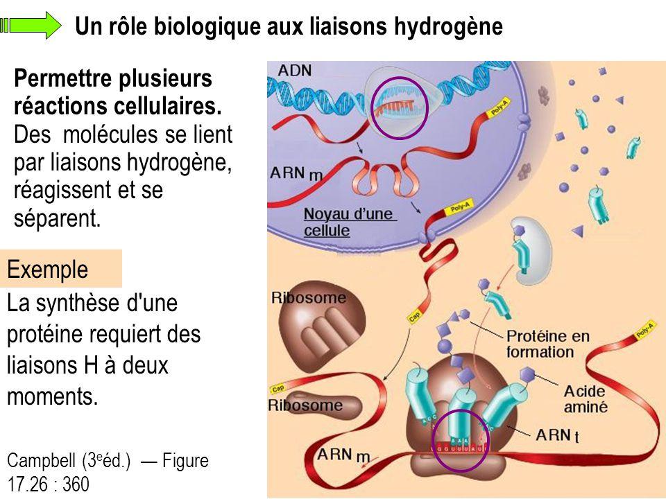 Un rôle biologique aux liaisons hydrogène Permettre plusieurs réactions cellulaires. Des molécules se lient par liaisons hydrogène, réagissent et se s