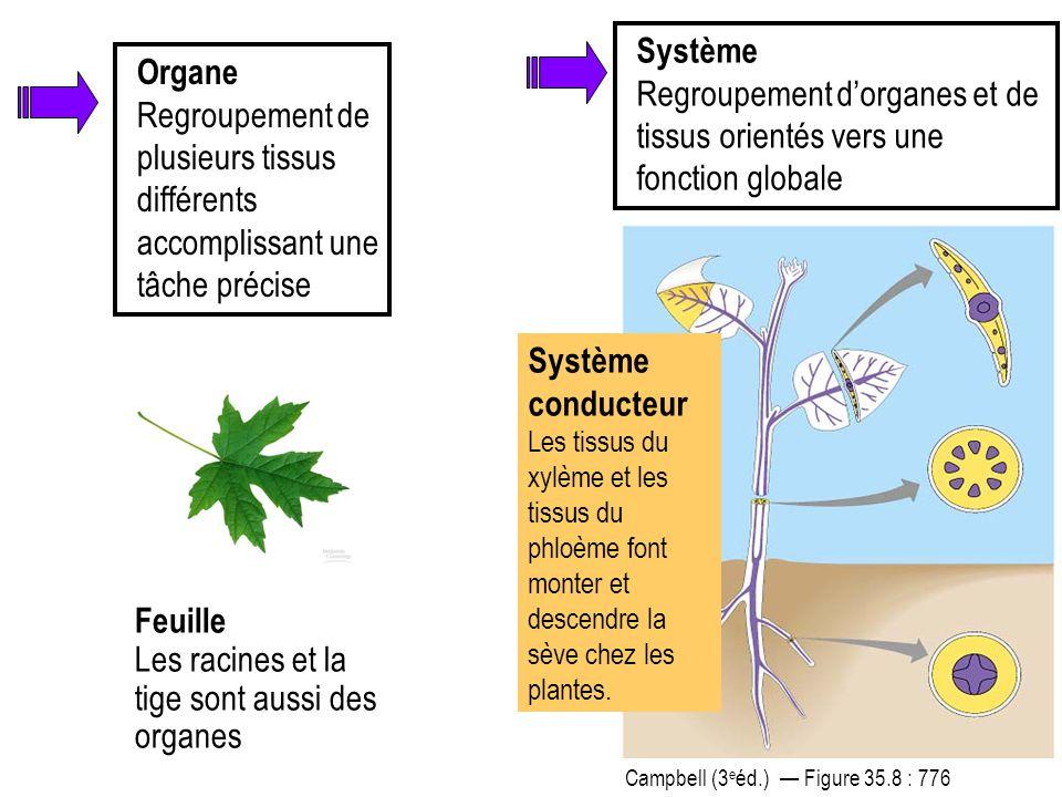 Organe Regroupement de plusieurs tissus différents accomplissant une tâche précise Feuille Les racines et la tige sont aussi des organes Système condu