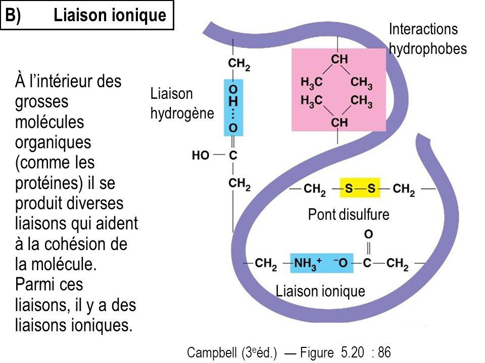 B)Liaison ionique À l'intérieur des grosses molécules organiques (comme les protéines) il se produit diverses liaisons qui aident à la cohésion de la