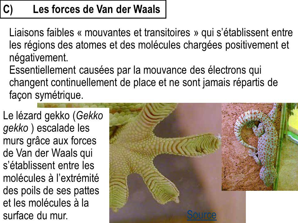 C)Les forces de Van der Waals Le lézard gekko ( Gekko gekko ) escalade les murs grâce aux forces de Van der Waals qui s'établissent entre les molécule