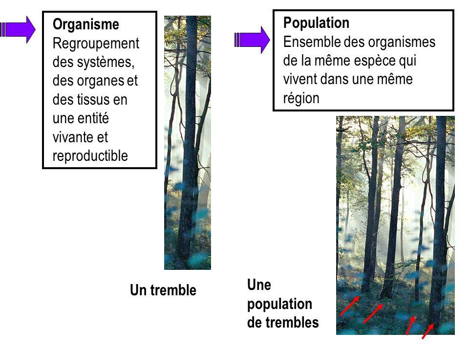 Organisme Regroupement des systèmes, des organes et des tissus en une entité vivante et reproductible Un tremble Population Ensemble des organismes de