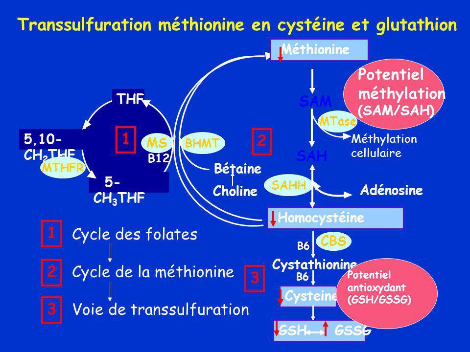 SAM SAH MTase SAHH Homocystéine B6 CBS BHMT Choline Bétaine Transsulfuration méthionine en cystéine et glutathion Cystathionine Cysteine GSH GSSG Méthionine Adénosine B6 5- CH 3 THF THF B12 MS 5,10- CH 2 THF MTHFR Méthylation cellulaire 1 2 3 1 2 3 Cycle des folates Cycle de la méthionine Voie de transsulfuration Potentiel méthylation (SAM/SAH) Potentiel antioxydant (GSH/GSSG)