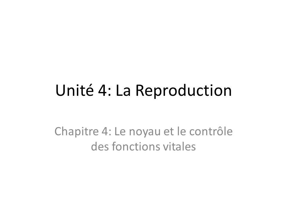 Unité 4: La Reproduction Chapitre 4: Le noyau et le contrôle des fonctions vitales