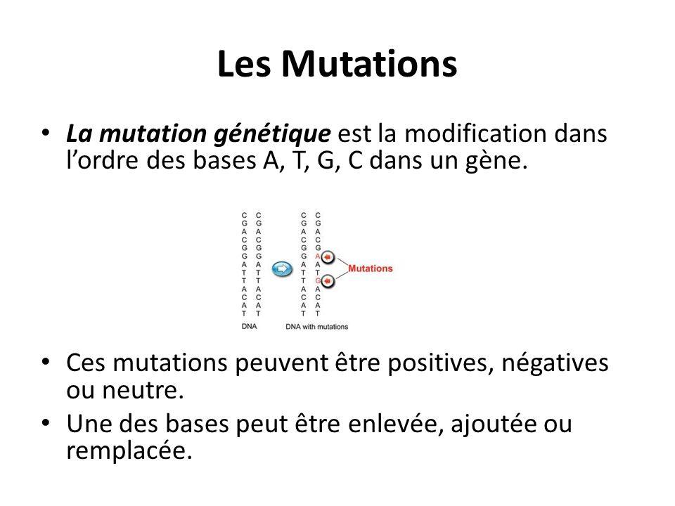 Les Mutations La mutation génétique est la modification dans l'ordre des bases A, T, G, C dans un gène. Ces mutations peuvent être positives, négative