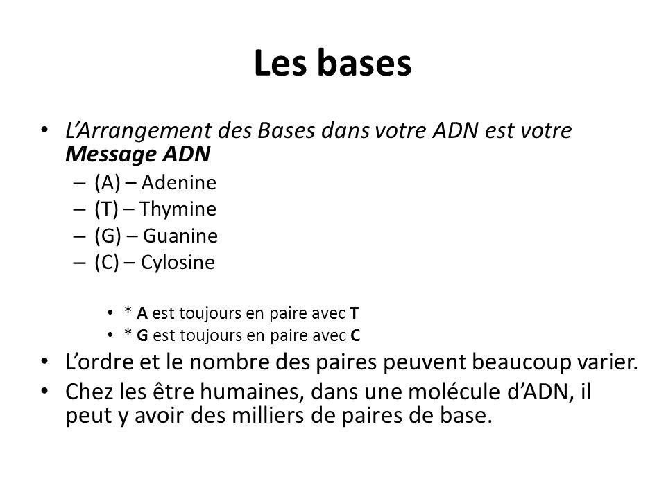 Les bases L'Arrangement des Bases dans votre ADN est votre Message ADN – (A) – Adenine – (T) – Thymine – (G) – Guanine – (C) – Cylosine * A est toujours en paire avec T * G est toujours en paire avec C L'ordre et le nombre des paires peuvent beaucoup varier.