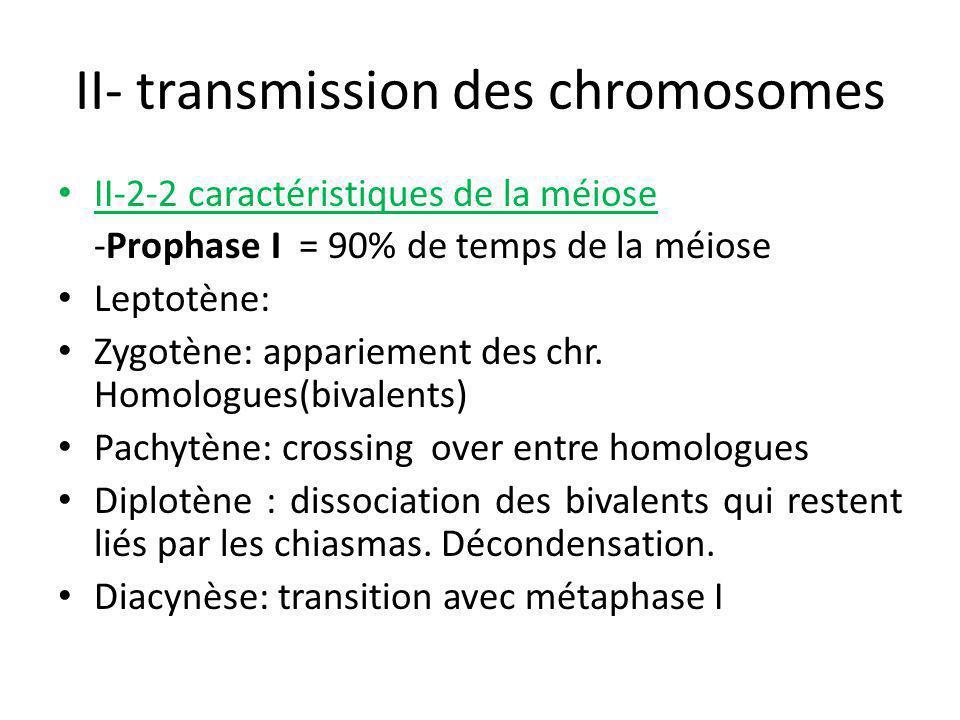 II- transmission des chromosomes II-2-2 caractéristiques de la méiose -Prophase I = 90% de temps de la méiose Leptotène: Zygotène: appariement des chr