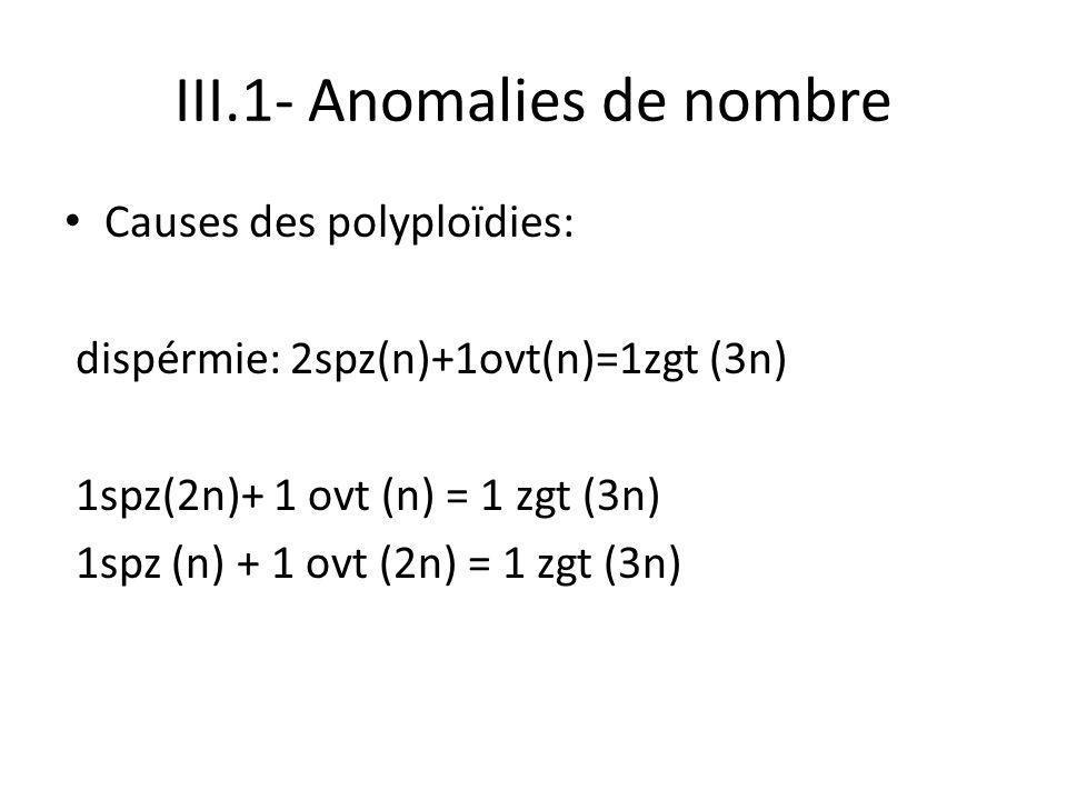 III.1- Anomalies de nombre Causes des polyploïdies: dispérmie: 2spz(n)+1ovt(n)=1zgt (3n) 1spz(2n)+ 1 ovt (n) = 1 zgt (3n) 1spz (n) + 1 ovt (2n) = 1 zg