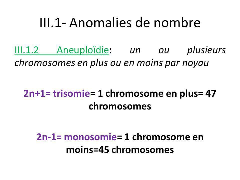 III.1.2 Aneuploïdie: un ou plusieurs chromosomes en plus ou en moins par noyau 2n+1= trisomie= 1 chromosome en plus= 47 chromosomes 2n-1= monosomie= 1