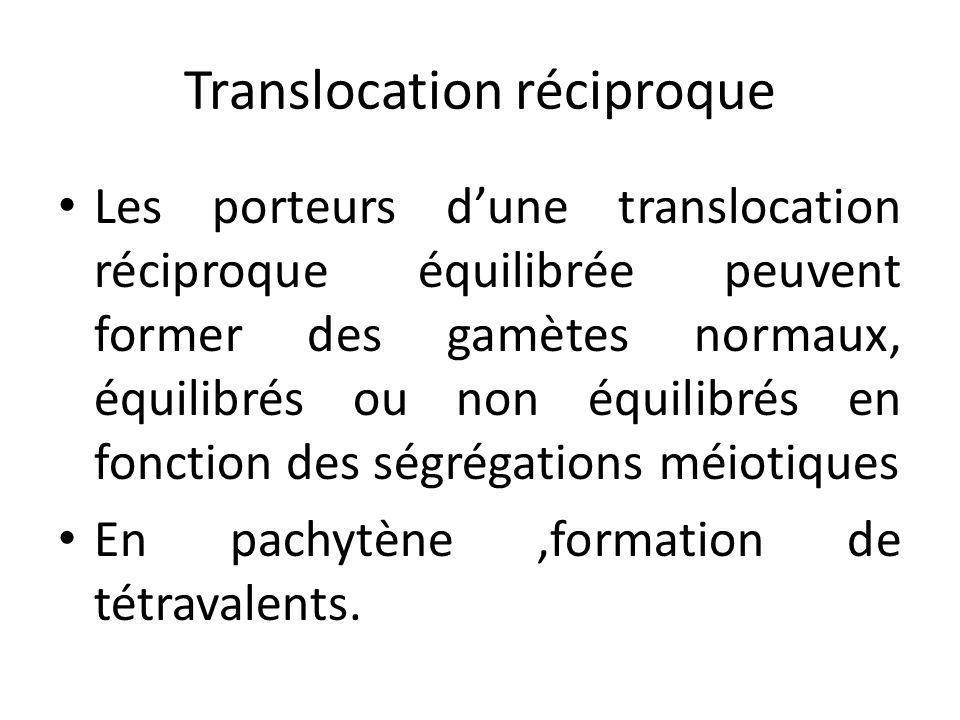 Translocation réciproque Les porteurs d'une translocation réciproque équilibrée peuvent former des gamètes normaux, équilibrés ou non équilibrés en fo