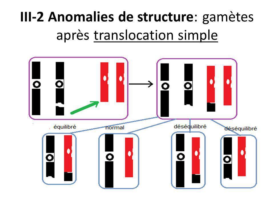 III-2 Anomalies de structure: gamètes après translocation simple