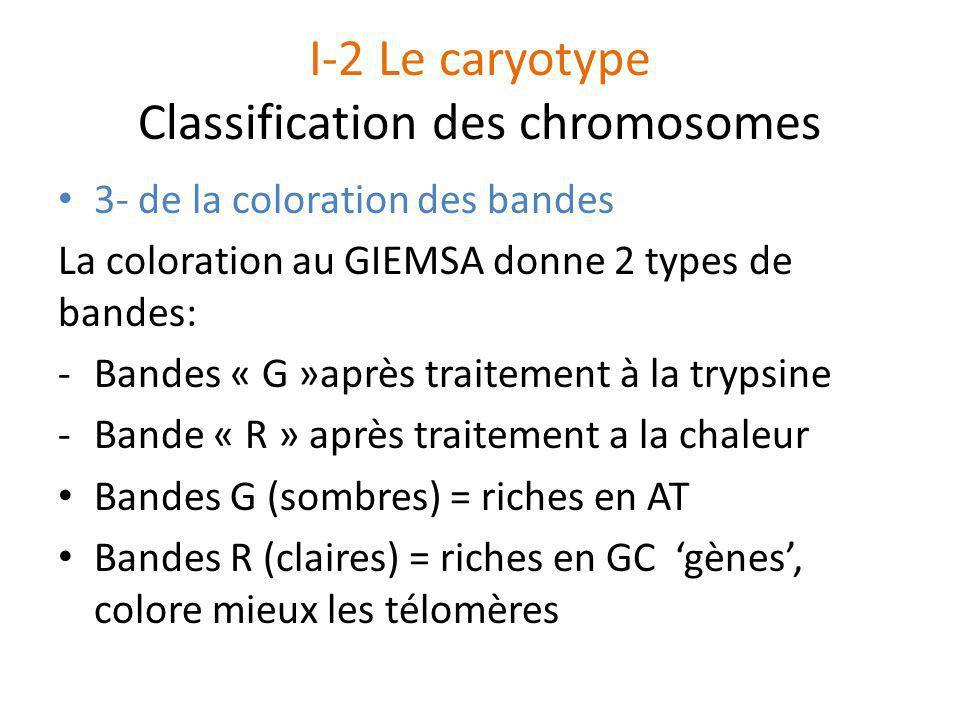 I-2 Le caryotype Classification des chromosomes 3- de la coloration des bandes La coloration au GIEMSA donne 2 types de bandes: -Bandes « G »après tra