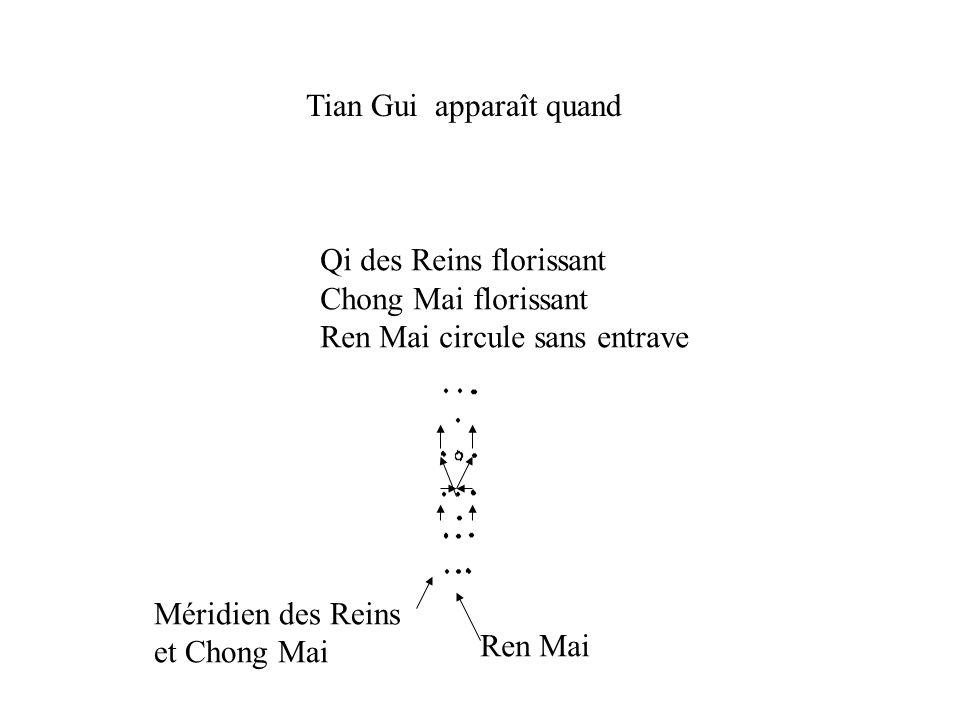Tian Gui apparaît quand Qi des Reins florissant Chong Mai florissant Ren Mai circule sans entrave Ren Mai Méridien des Reins et Chong Mai