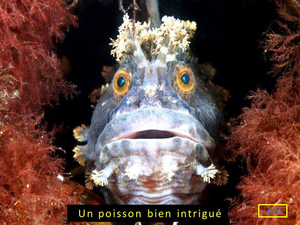 auto Un poisson bien intrigué