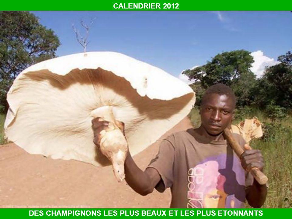 CALENDRIER 2012 DES CHAMPIGNONS LES PLUS BEAUX ET LES PLUS ETONNANTS