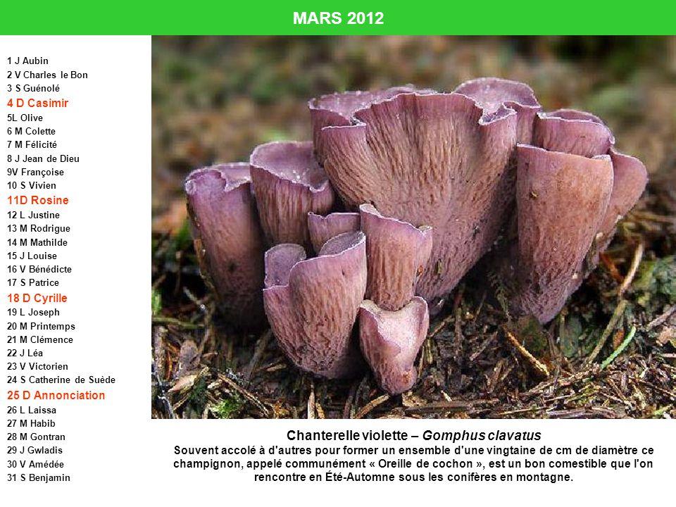 MARS 2012 1 J Aubin 2 V Charles le Bon 3 S Guénolé 4 D Casimir 5L Olive 6 M Colette 7 M Félicité 8 J Jean de Dieu 9V Françoise 10 S Vivien 11D Rosine