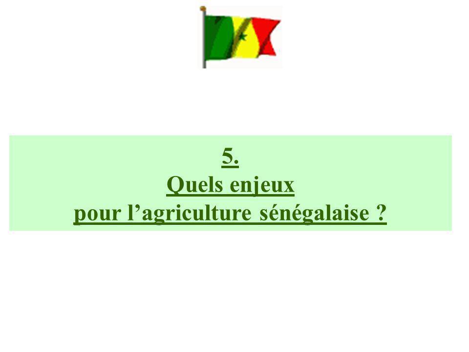 5. Quels enjeux pour l'agriculture sénégalaise ?