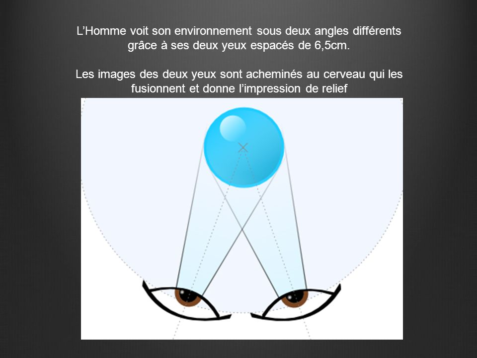L'Homme voit son environnement sous deux angles différents grâce à ses deux yeux espacés de 6,5cm. Les images des deux yeux sont acheminés au cerveau