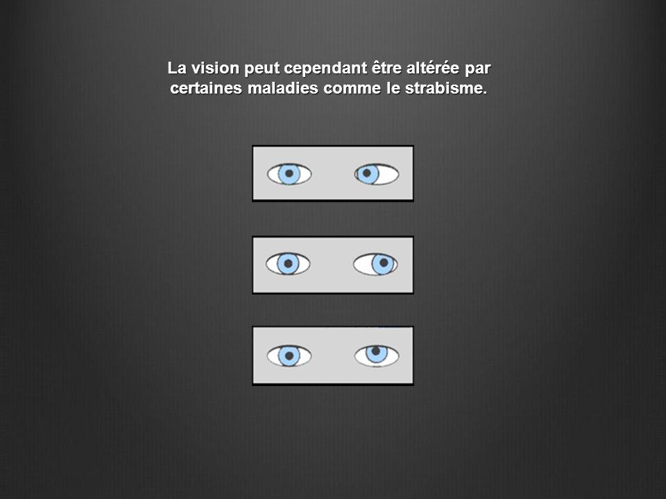 La vision peut cependant être altérée par certaines maladies comme le strabisme.