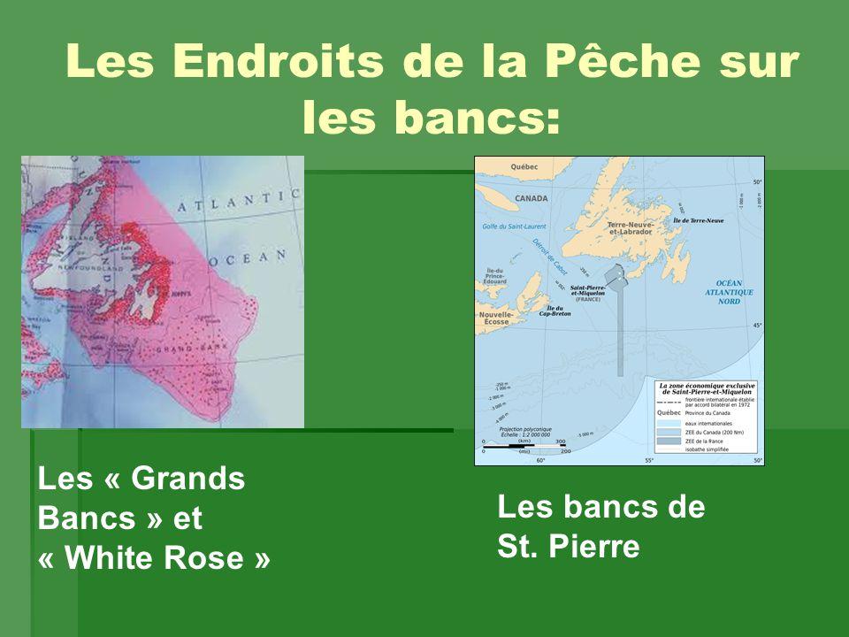 Les Endroits de la Pêche sur les bancs: Les « Grands Bancs » et « White Rose » Les bancs de St.